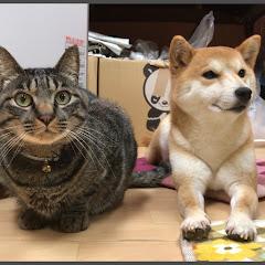 Shiba inu&Cat Channel????&???