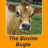 Bovine Bugle