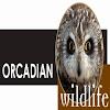 Orcadian Wildlife