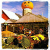 Goebbert's Farm