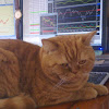 Дневник биржевого спекулянта