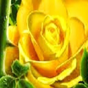 YellowRoseforTexas - News Rumors and Cams  AN66SAwyxrk_rj25ZXBKpOYIl_M584NtyUjxVDeSDQ=s288-mo-c-c0xffffffff-rj-k-no