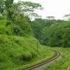 thegreencorridor