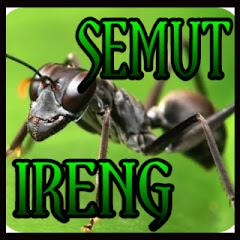 Semut Ireng Ono Ono Wae