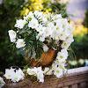 fleursdefrance
