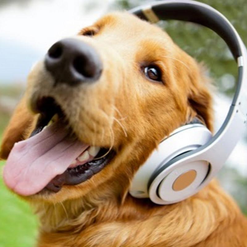 Parental Dog Training Trivandrum