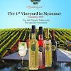 Aythaya Vineyard Myanmar 1st vineyard