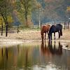 Paardenkamp