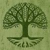 The Irish School of Herbal Medicine