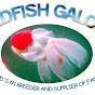 goldfishgalorenz