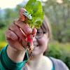 pakovska: my french permaculture garden