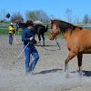 FAB Horsemanship