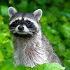 Alford Wildlife & Pest Management