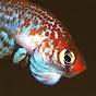 tropicalfishlover