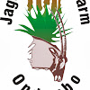 Jagd und Gästefarm Ondombo