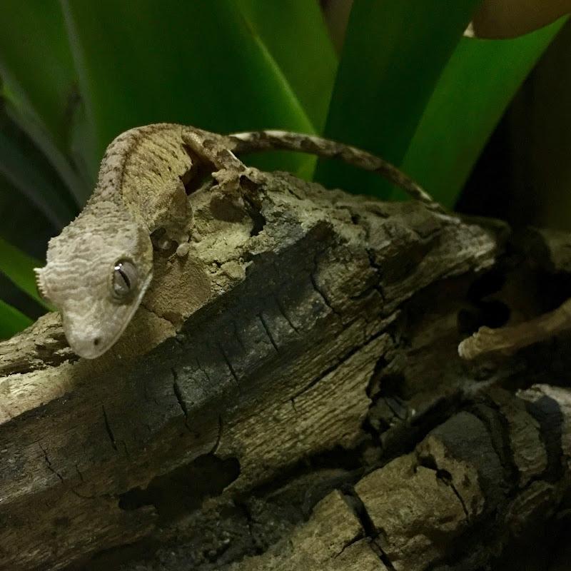 Reptiles Mania