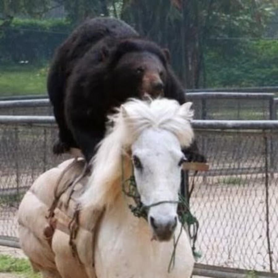 bronzehorse146 youtube