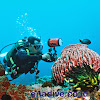 Ena Dive Marine Adventure