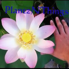 PlantzNThings