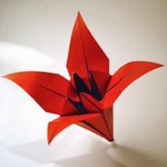 Paperlilies