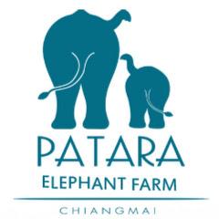 pataraelephantfarm