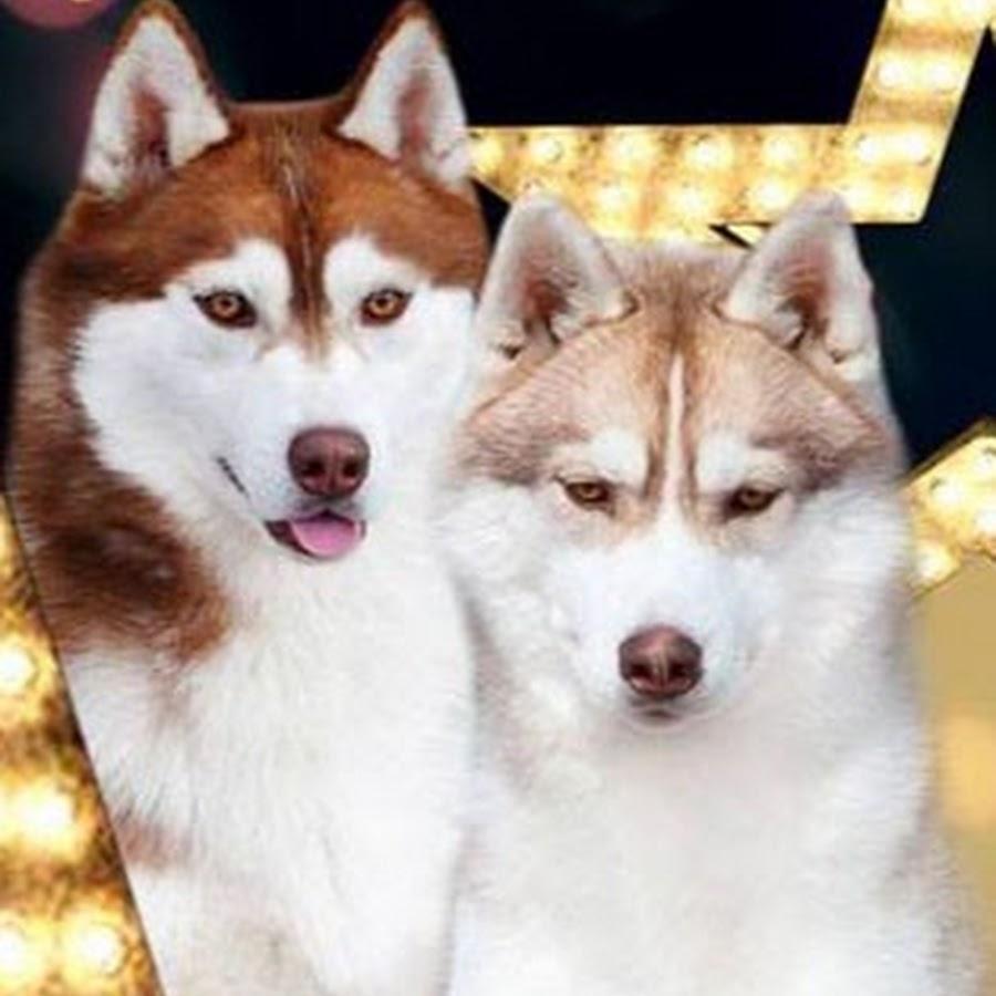 Huskies Online