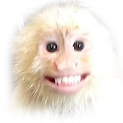 MonkeyXander
