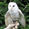 Wedding owl ring bearing