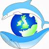 seawatchfoundation
