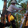 Hendrickson Tree Care Company
