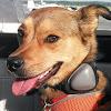 Turbo the Flying Dog
