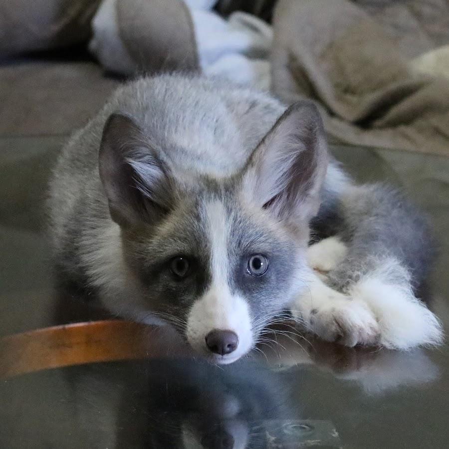 Tyr The White Fox Youtube