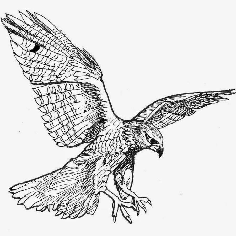 flying falcon drawing - 736×650