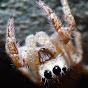 Spidera