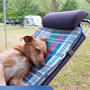 Camping Tasmania