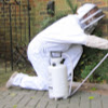 Brighton Wasp Nest Removal