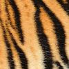 NAT Wild Animals