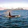 OrcaAdventureLodgeAK