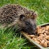 Ark Wildlife - Bird Food, Habitats & Accessories
