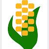 Corn Con