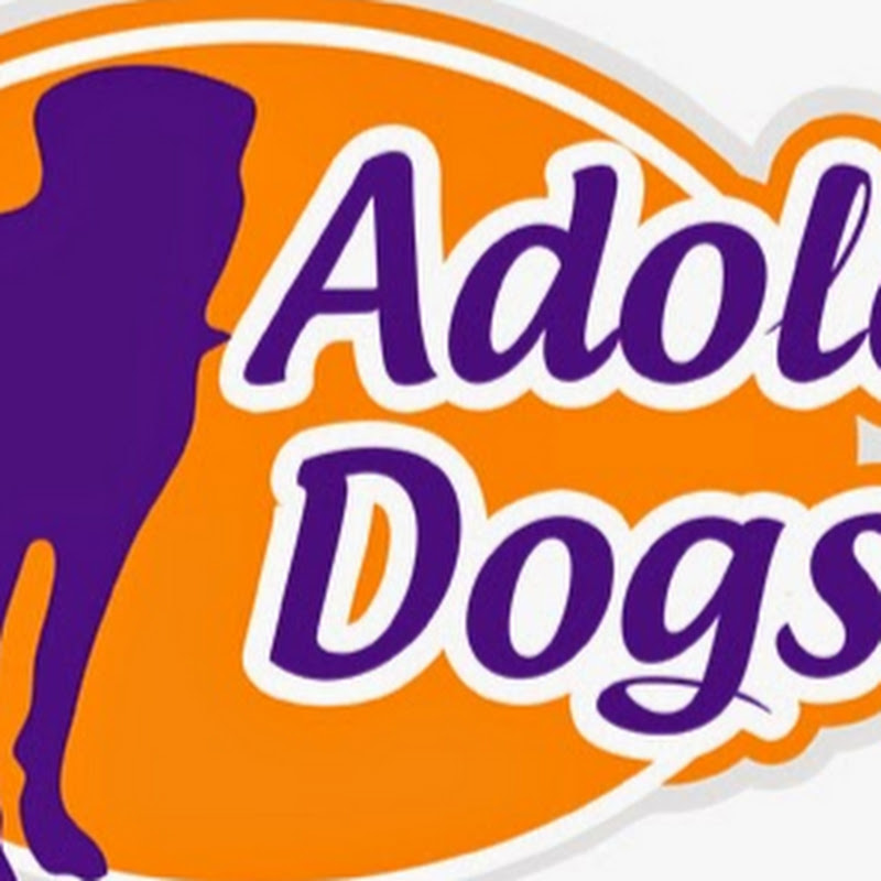 Adolescent Dogs TV