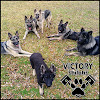 Victory Shilohs