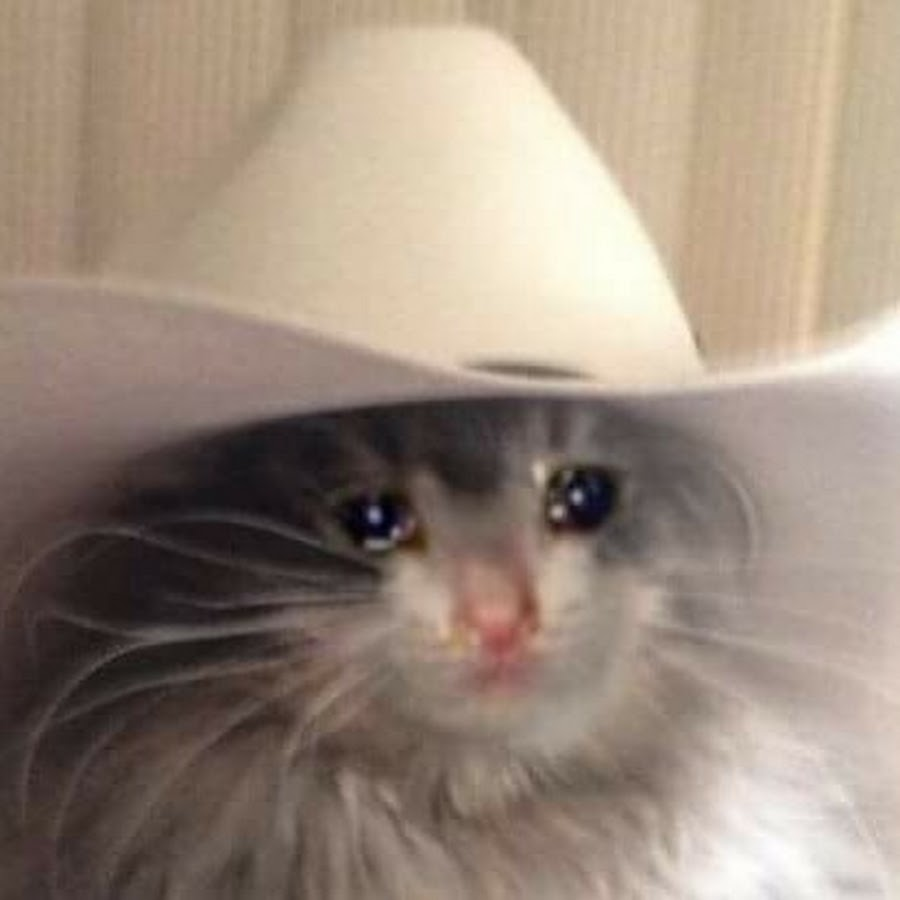 Sad Cat in a Cowboy Hat - YouTube