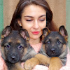 Канал о собаках Dog channel NG