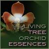 livingtreeorchids