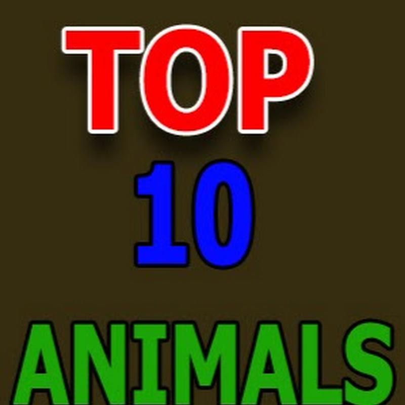 TOP 10 Animals