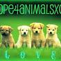 hope4animalsxox