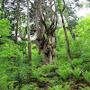 Oki Islands UNESCO Global Geopark 隠岐ユネスコ世界ジオパーク