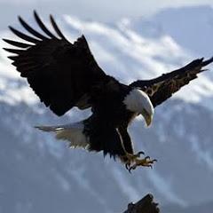 Eagle ★