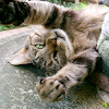 maynardcat